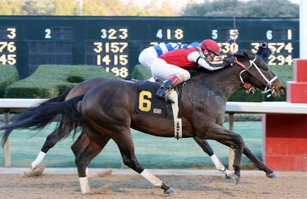 Ride On Curlin Exits Essex In Good Order Horse Racing Nation