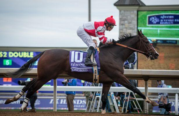 Horse Racing Nation The Fan Powered Horse Racing Community